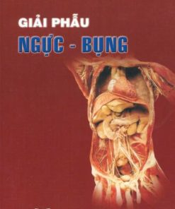 giai_phau_nguc_bung